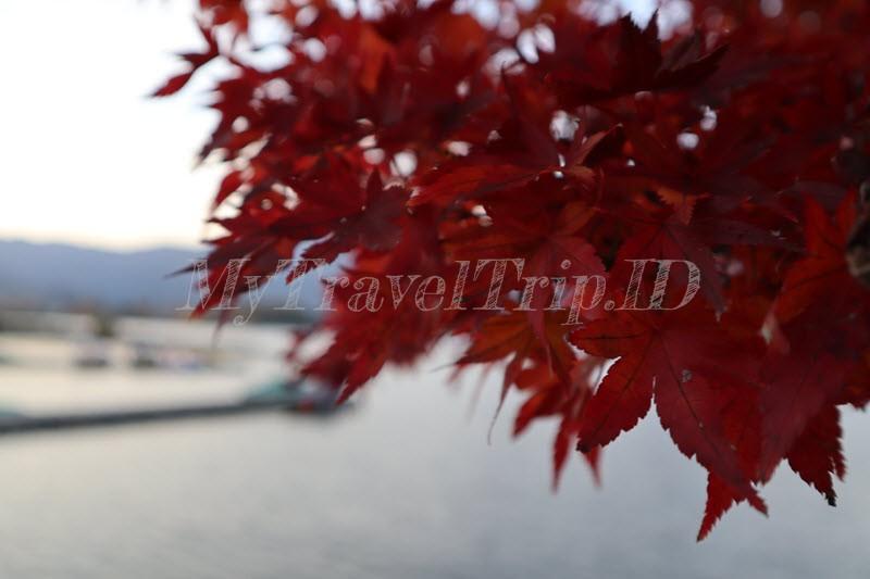 Musim Gugur Telah Tiba Di Jepang